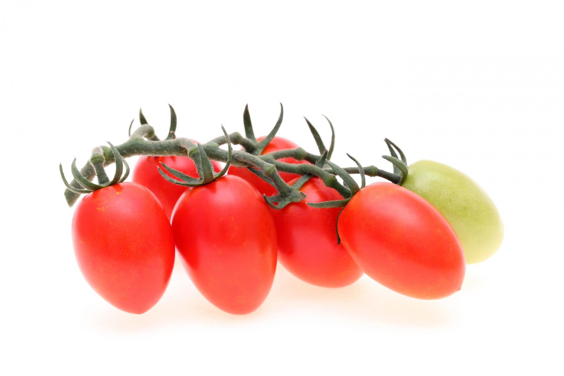 ミニトマトのアイコ